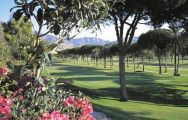 Rio Real Golf Club consists of lots of the most excellent golf course near Costa Del Sol