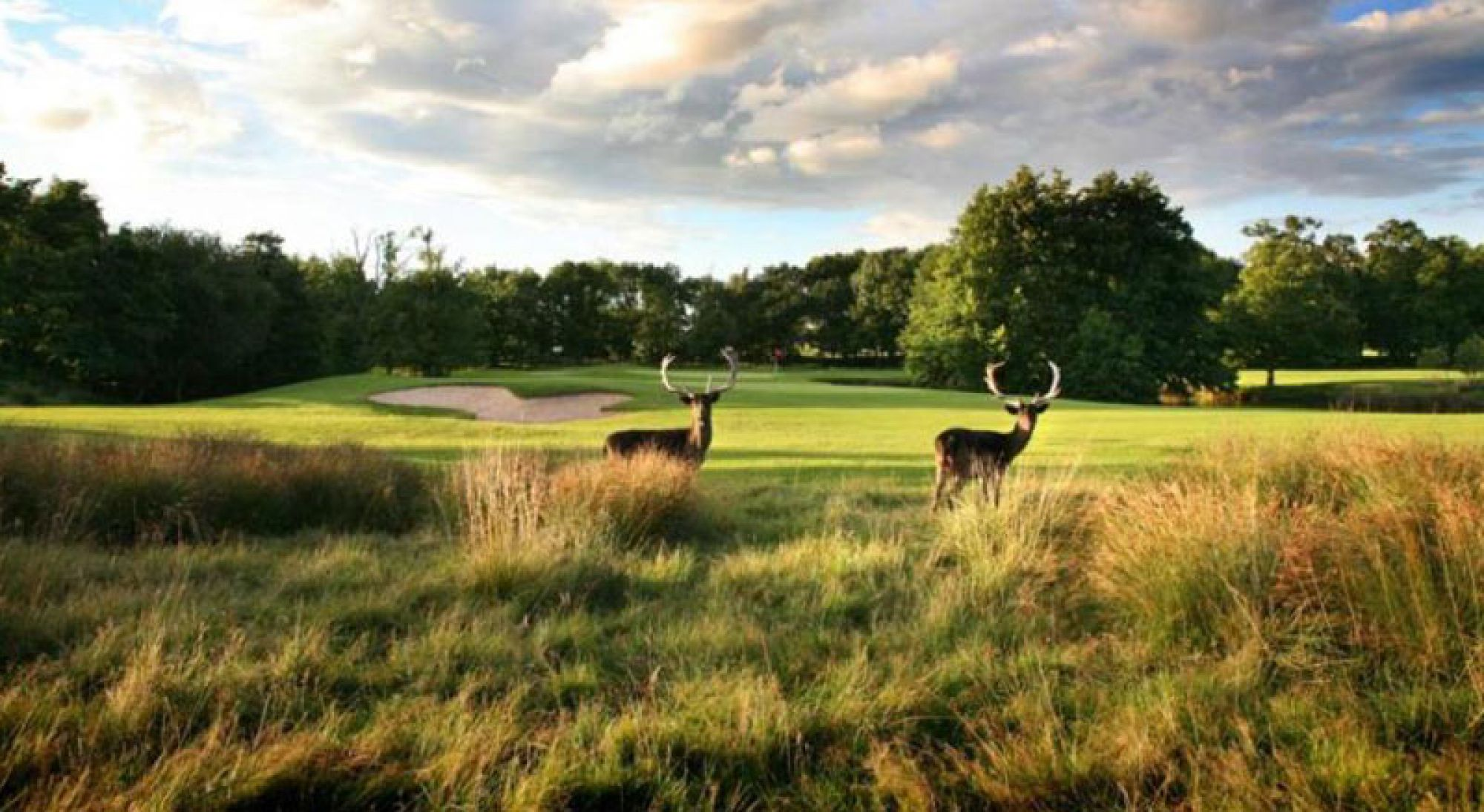 The Forest of Arden Golf's beautiful golf course in magnificent West Midlands.